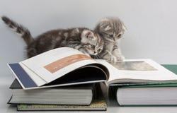 Dos gatitos están considerando un libro Fotografía de archivo libre de regalías