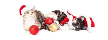 Dos gatitos juguetones de la Navidad Fotografía de archivo