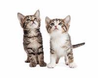 Dos gatitos lindos que miran para arriba Fotos de archivo