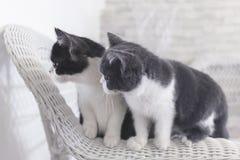 Dos gatitos que miran algo Fotografía de archivo libre de regalías