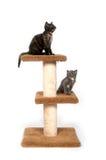 Dos gatitos que se sientan en torre Imagen de archivo