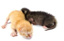 Dos gatitos recién nacidos fotografía de archivo