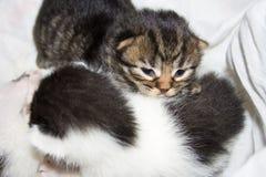 Dos gatitos recién nacidos snuggling. Fotos de archivo libres de regalías