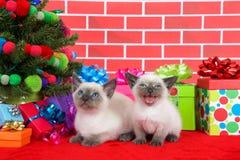 Dos gatitos siameses por el árbol de navidad Foto de archivo