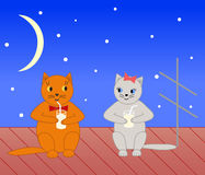 Dos gatos. Fotos de archivo