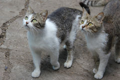 Dos gatos Fotos de archivo libres de regalías