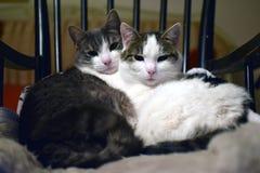 Dos gatos Foto de archivo