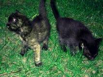 Dos gatos adorables en hierba verde Foto de archivo libre de regalías
