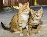 Dos gatos cariñosos divertidos de la calle Imagen de archivo libre de regalías