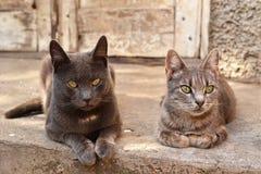 Dos gatos cerca de una casa abandonada Imagen de archivo libre de regalías