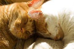 Dos gatos de gato atigrado anaranjados que duermen con sus cabezas junto Imágenes de archivo libres de regalías