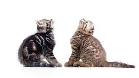 Dos gatos de los gatitos que se sientan enfrente de y que miran para arriba Fotos de archivo