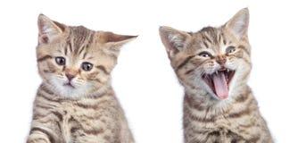 Dos gatos divertidos con las emociones opuestas una felices y otro infeliz o triste aislados en blanco Foto de archivo