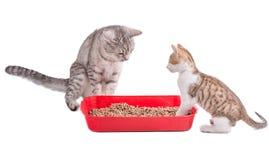 Dos gatos divertidos que juegan en un retrete del gato Foto de archivo libre de regalías