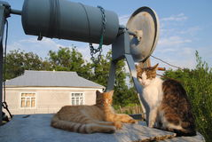 Dos gatos en el pozo Fotografía de archivo