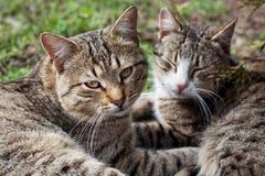Dos gatos en la hierba Fotografía de archivo