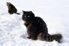 Dos gatos en la nieve Fotografía de archivo