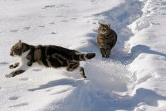 Dos gatos en la nieve Imágenes de archivo libres de regalías