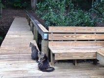 Dos gatos en un muelle Imágenes de archivo libres de regalías