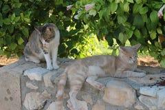Dos gatos en una pared de piedra en un fondo de hojas y de flores verdes Fotos de archivo libres de regalías