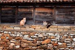 Dos gatos en Zheravna, Bulgaria Imágenes de archivo libres de regalías