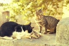 Dos gatos están comiendo Foto de archivo