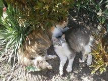 Dos gatos están en el jardín de flores Fotos de archivo libres de regalías