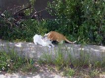 Dos gatos felices cr?an y abrazan en bardyur imagenes de archivo