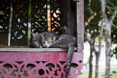 Dos gatos hermosos Foto de archivo libre de regalías