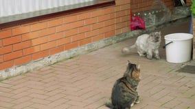 Dos gatos jovenes se sientan cerca de la materia nacional y del funcionamiento lejos uno por uno Pared, cubo blanco, tarros de cr metrajes