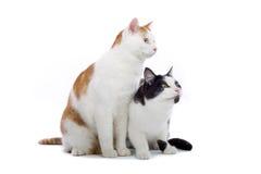 Dos gatos lindos Imagen de archivo libre de regalías