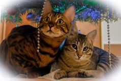 Dos gatos lindos debajo del árbol del Año Nuevo imagen de archivo