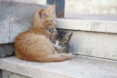 Dos gatos lindos que mienten en las escaleras Foto de archivo libre de regalías