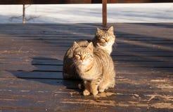 Dos gatos lindos, se sientan de lado a lado en un mirador de madera, un día soleado de la primavera Imagenes de archivo