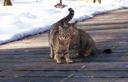 Dos gatos lindos, se sientan de lado a lado en un mirador de madera, un día soleado de la primavera Fotos de archivo