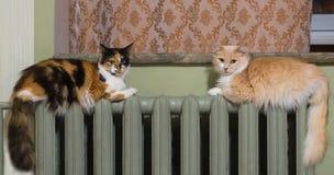 Dos gatos mienten igualmente en el radiador de la calefacción imagen de archivo libre de regalías