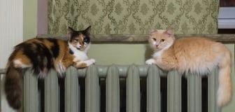 Dos gatos mienten igualmente en el radiador de la calefacción fotografía de archivo