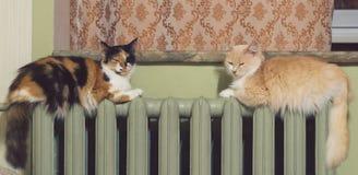 Dos gatos mienten igualmente en el radiador de la calefacción fotos de archivo