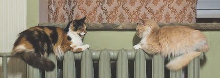 Dos gatos mienten igualmente en el radiador de la calefacción foto de archivo
