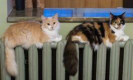Dos gatos mienten igualmente en el radiador de la calefacción imágenes de archivo libres de regalías