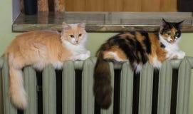 Dos gatos mienten igualmente en el radiador de la calefacción fotografía de archivo libre de regalías