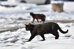 Dos gatos negros están caminando en la calle en un día de invierno Imágenes de archivo libres de regalías