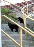 Dos gatos negros que descansan sobre una escalera Imagen de archivo