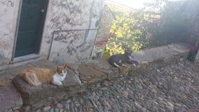 Dos gatos perezosos Fotos de archivo libres de regalías