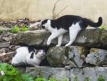 Dos gatos que luchan en la calle Imagen de archivo libre de regalías