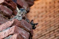 Dos gatos que miran algo Foto de archivo