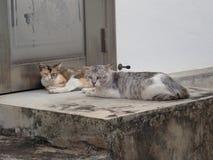 Dos gatos que se acuestan en un callejón foto de archivo libre de regalías