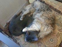 Dos gatos que se acurrucan en silla fotos de archivo