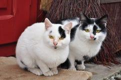 Dos gatos lindos Imágenes de archivo libres de regalías