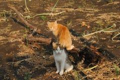 Dos gatos que se sientan en la tierra Imágenes de archivo libres de regalías